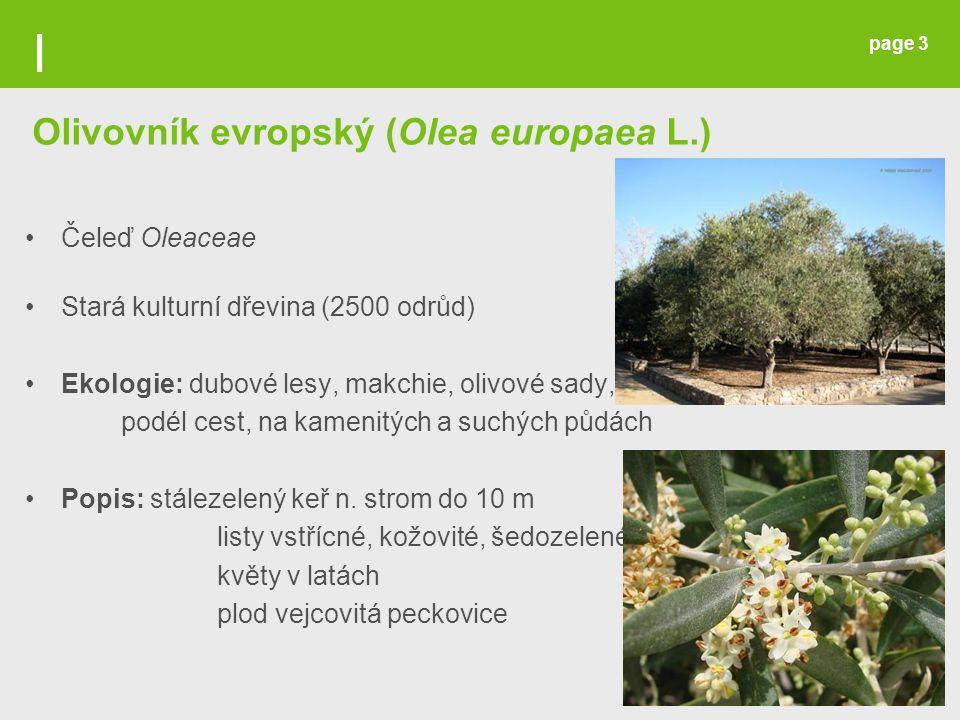 page 3 Olivovník evropský (Olea europaea L.) Čeleď Oleaceae Stará kulturní dřevina (2500 odrůd) Ekologie: dubové lesy, makchie, olivové sady, podél ce