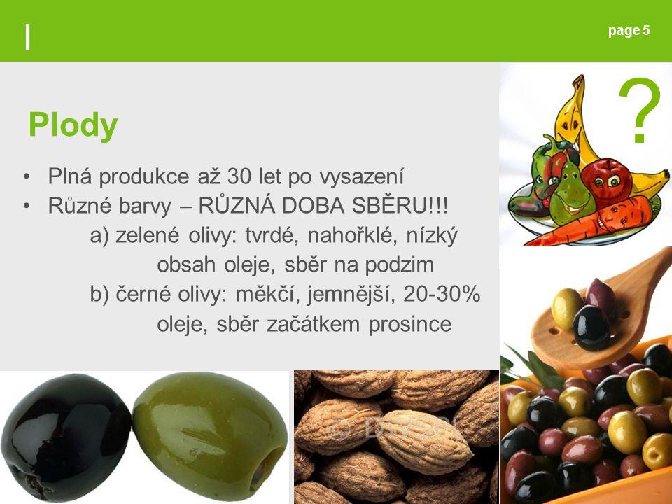 page 5 Plná produkce až 30 let po vysazení Různé barvy – RŮZNÁ DOBA SBĚRU!!! a) zelené olivy: tvrdé, nahořklé, nízký obsah oleje, sběr na podzim b) če