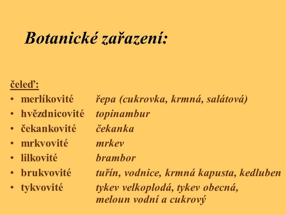 Botanické zařazení: čeleď: merlíkovitéřepa (cukrovka, krmná, salátová) hvězdnicovitétopinambur čekankovitéčekanka mrkvovitémrkev lilkovitébrambor bruk