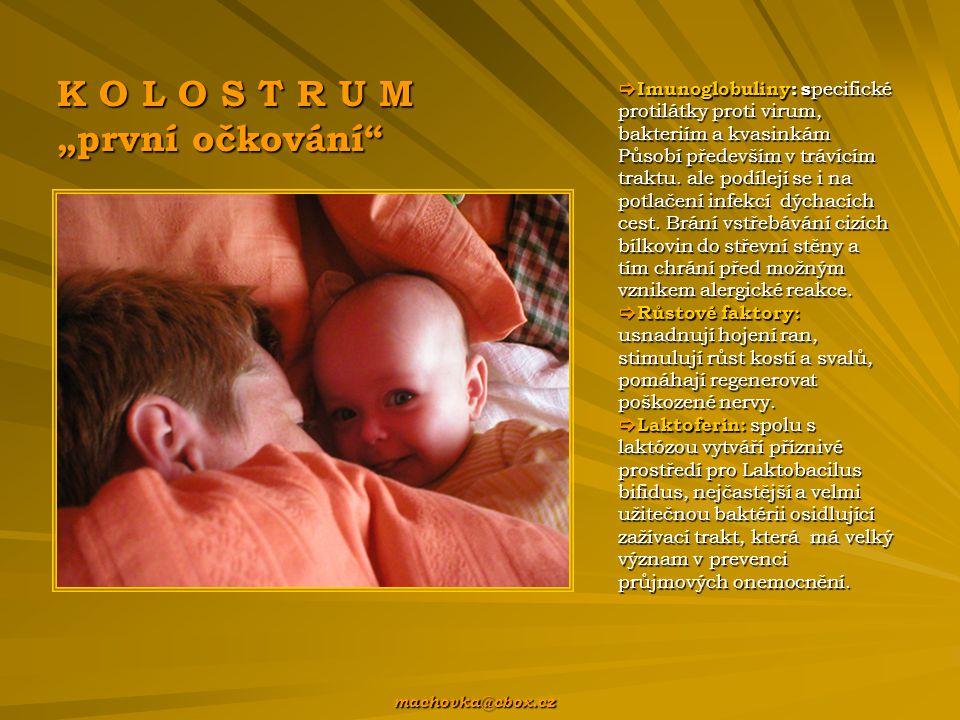  Imunoglobuliny: s pecifické protilátky proti virum, bakteriím a kvasinkám Působí především v trávícím traktu.