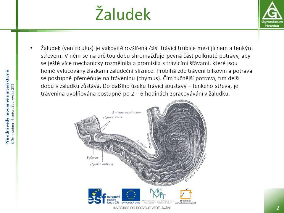 Přírodní vědy moderně a interaktivně ©Gymnázium Hranice, Zborovská 293 Žaludek Žaludek (ventriculus) je vakovitě rozšířená část trávicí trubice mezi j