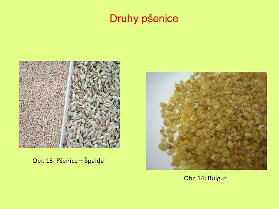 Obr. 13: Pšenice – Špalda Obr. 14: Bulgur Druhy pšenice