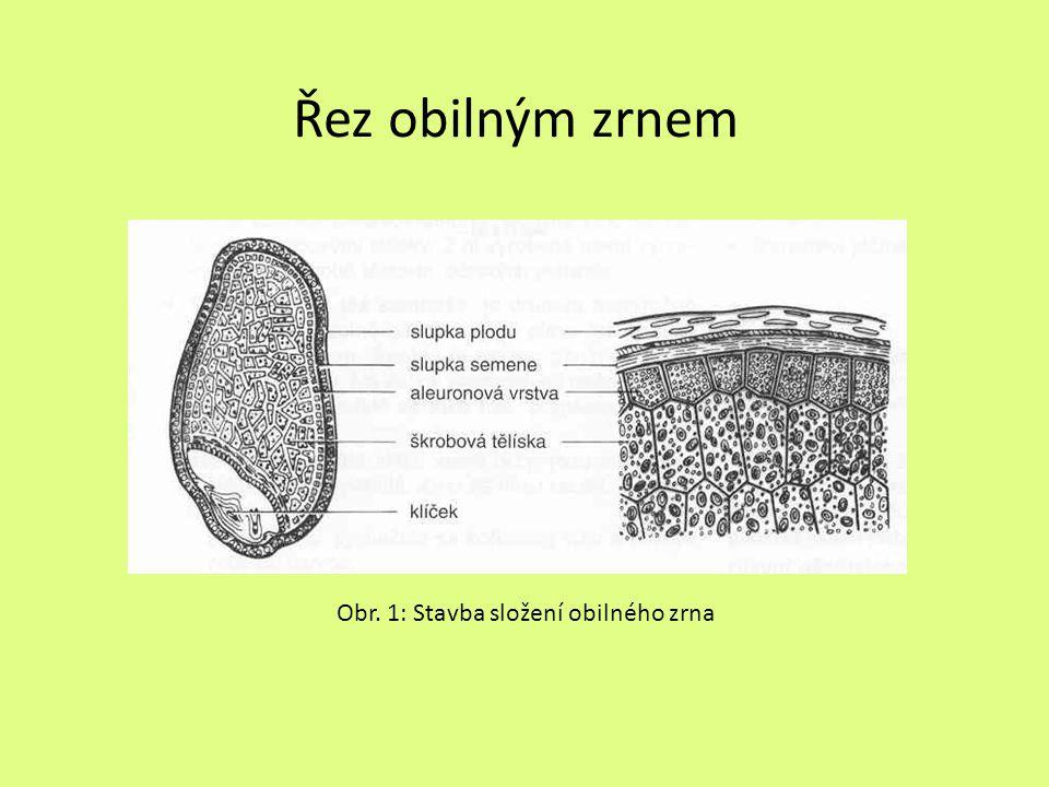 Řez obilným zrnem Obr. 1: Stavba složení obilného zrna