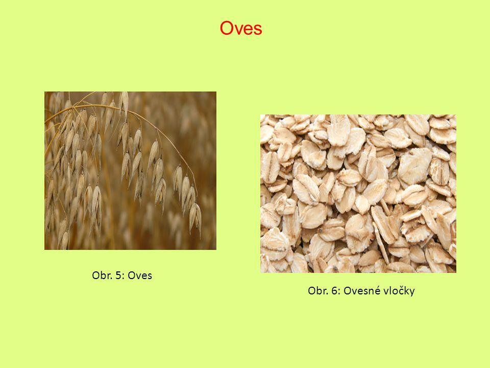 Oves Obr. 5: Oves Obr. 6: Ovesné vločky