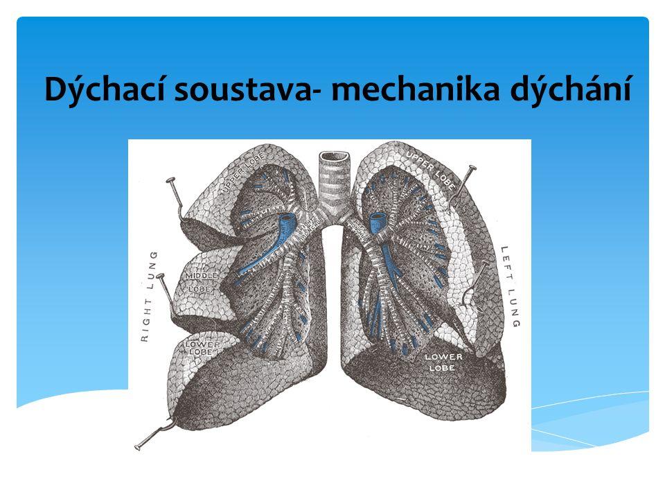 Dýchací soustava- mechanika dýchání