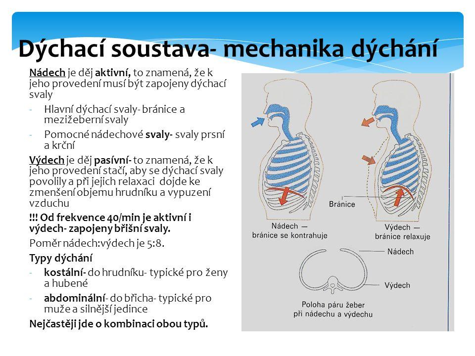Nádech je děj aktivní, to znamená, že k jeho provedení musí být zapojeny dýchací svaly -Hlavní dýchací svaly- bránice a mezižeberní svaly -Pomocné nádechové svaly- svaly prsní a krční Výdech je děj pasívní- to znamená, že k jeho provedení stačí, aby se dýchací svaly povolily a při jejich relaxaci dojde ke zmenšení objemu hrudníku a vypuzení vzduchu !!.