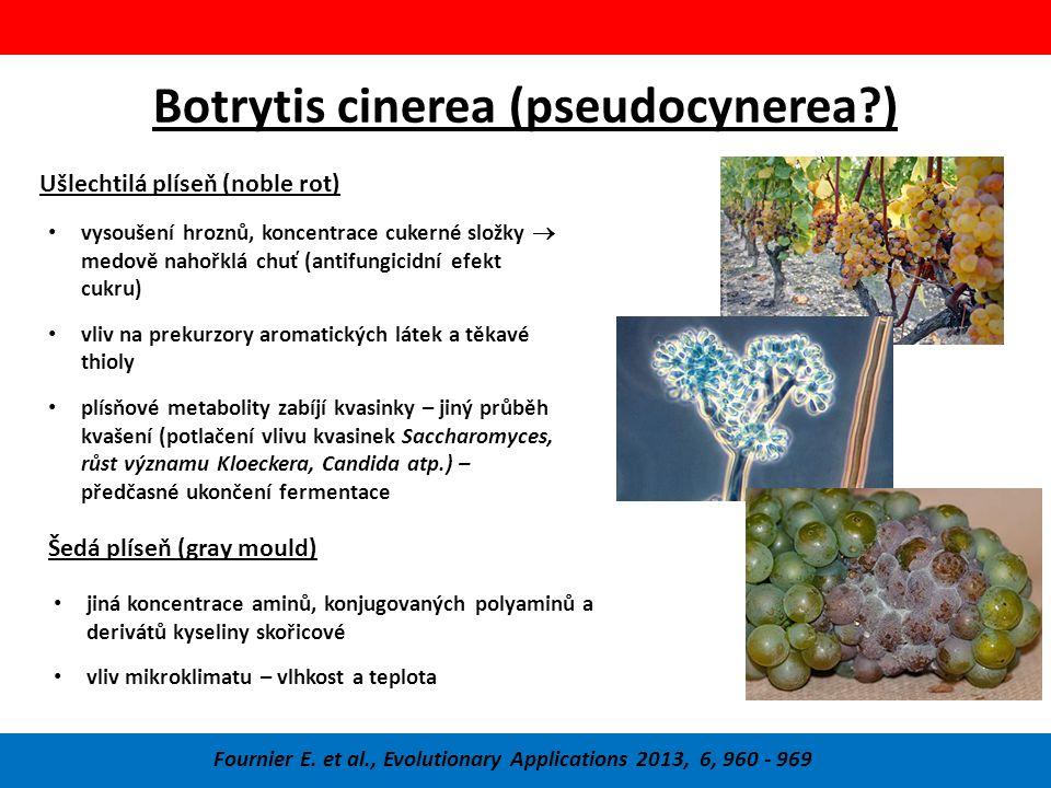 Botrytis cinerea (pseudocynerea?) Fournier E.