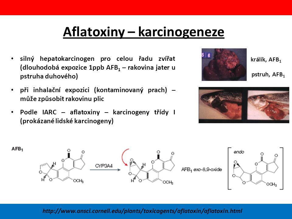 Aflatoxiny – karcinogeneze silný hepatokarcinogen pro celou řadu zvířat (dlouhodobá expozice 1ppb AFB 1 – rakovina jater u pstruha duhového) při inhalační expozici (kontaminovaný prach) – může způsobit rakovinu plic Podle IARC – aflatoxiny – karcinogeny třídy I (prokázané lidské karcinogeny) http://www.ansci.cornell.edu/plants/toxicagents/aflatoxin/aflatoxin.html králík, AFB 1 pstruh, AFB 1