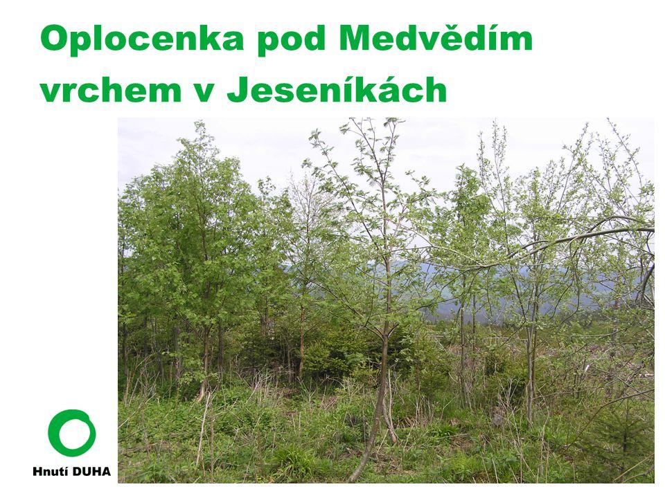 V oplocence 5375 ks mladých stromků na hektar, z toho přirozené zmlazení 4050 ks/ha, smrk 54,4% Mimo oplocenku 2425 ks na hektar, z toho přirozené zmlazení 450 ks/ha, smrk 90%