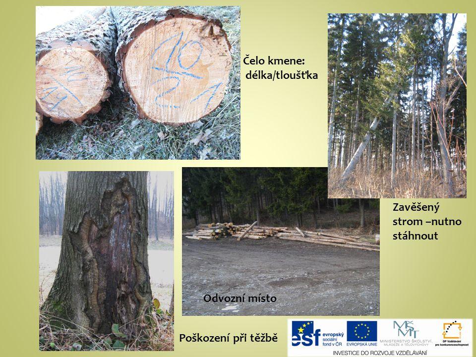 Čelo kmene: délka/tloušťka Odvozní místo Zavěšený strom –nutno stáhnout Poškození při těžbě