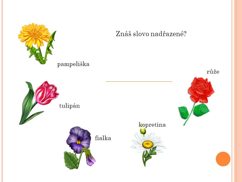 Znáš slovo nadřazené? pampeliška tulipán fialka kopretina růže