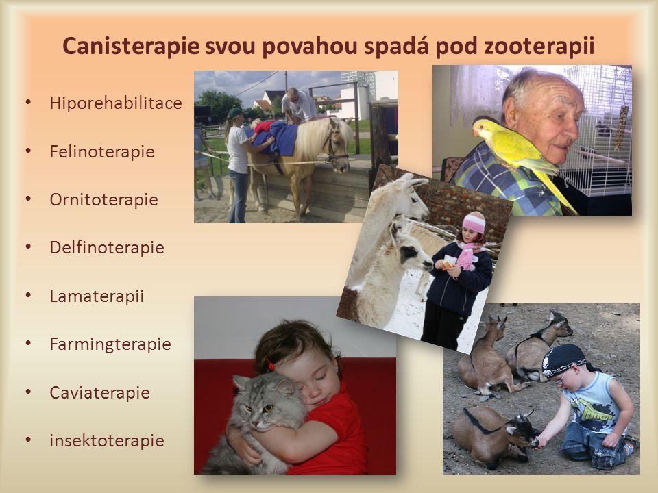 Canisterapie svou povahou spadá pod zooterapii Hiporehabilitace Felinoterapie Ornitoterapie Delfinoterapie Lamaterapii Farmingterapie Caviaterapie ins