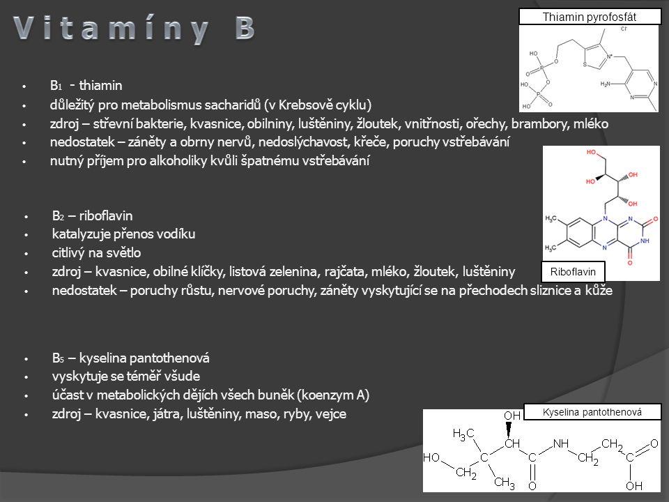 B 1 - thiamin důležitý pro metabolismus sacharidů (v Krebsově cyklu) zdroj – střevní bakterie, kvasnice, obilniny, luštěniny, žloutek, vnitřnosti, oře