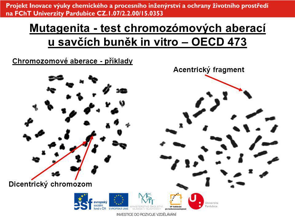 Mutagenita - test chromozómových aberací u savčích buněk in vitro – OECD 473 Chromozomové aberace - příklady Dicentrický chromozom Acentrický fragment