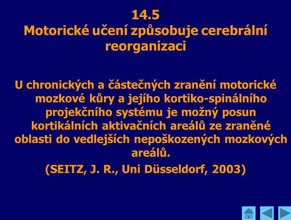 14.5 Motorické učení způsobuje cerebrální reorganizaci U chronických a částečných zranění motorické mozkové kůry a jejího kortiko-spinálního projekční