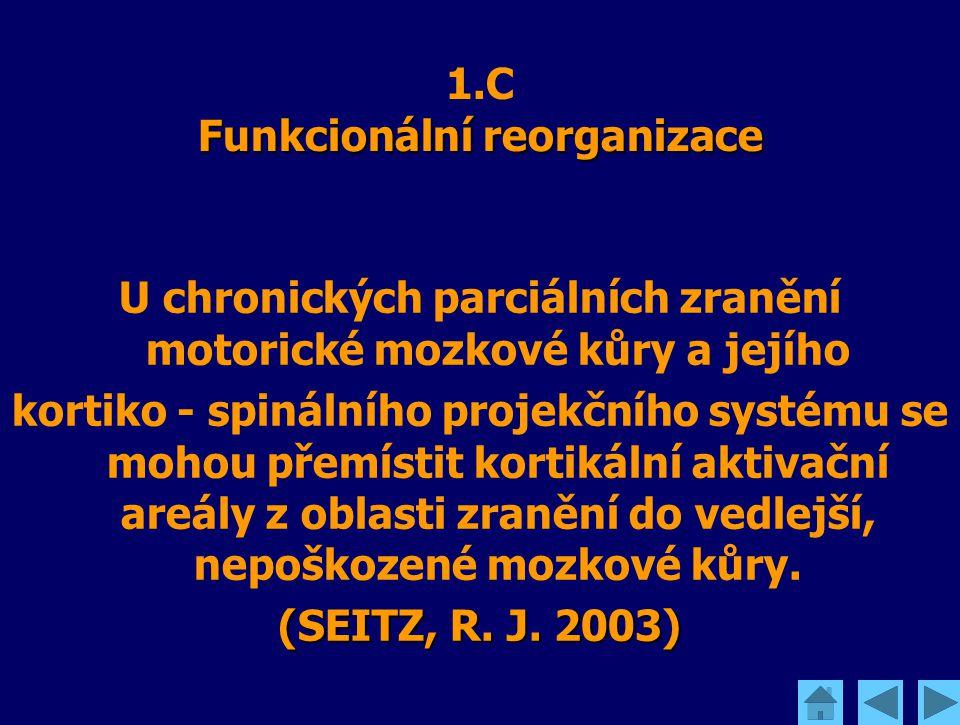 Funkcionální reorganizace 1.C Funkcionální reorganizace U chronických parciálních zranění motorické mozkové kůry a jejího kortiko - spinálního projekč