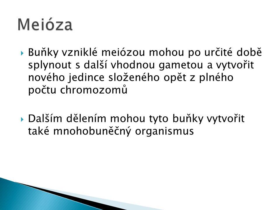  Výsledek mitózy = 2 s rodičem shodné buňky  Výsledek meiózy = 4 od rodiče odlišné buňky ◦ Vede ke snížení počtu chromozomů na polovinu