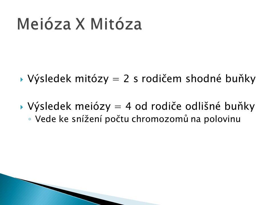  2 dělení po sobě jdoucí 1)Redukční (heterotypické)  Sníží se počet chromozomů u gamet na polovinu 2)Ekvační (homeotypické)  Zrací dělení, stejné jako mitóza