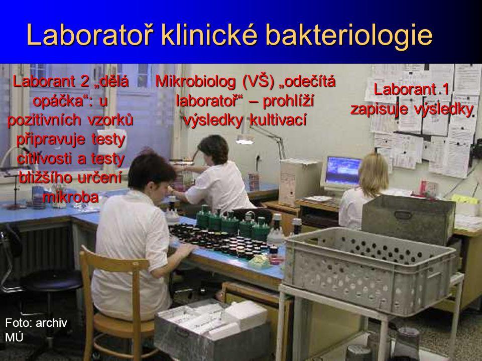 """Laboratoř klinické bakteriologie Mikrobiolog (VŠ) """"odečítá laboratoř"""" – prohlíží výsledky kultivací Laborant 1 zapisuje výsledky Laborant 2 """"dělá opáč"""
