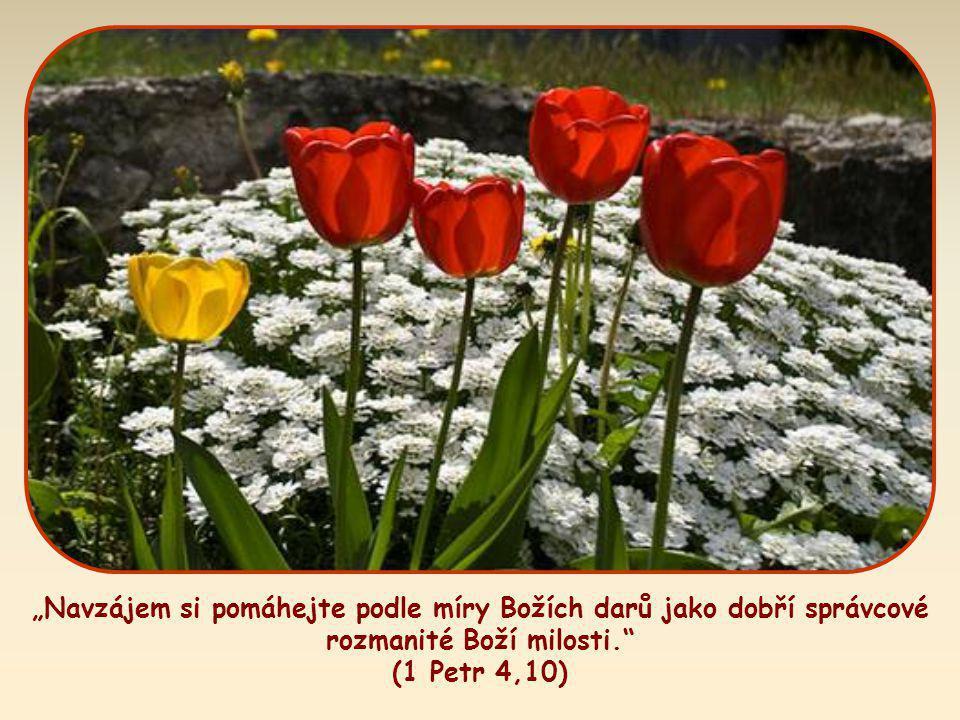 """""""Navzájem si pomáhejte podle míry Božích darů jako dobří správcové rozmanité Boží milosti. (1 Petr 4,10)"""