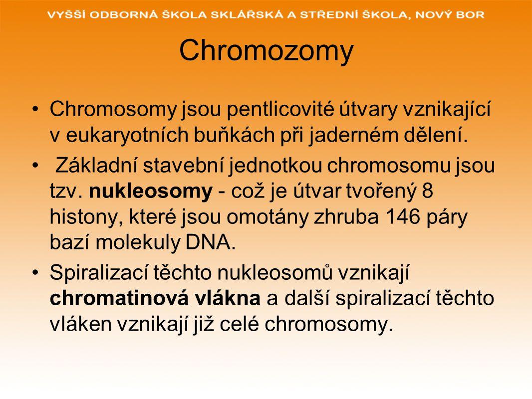 Chromozomy Chromosomy jsou pentlicovité útvary vznikající v eukaryotních buňkách při jaderném dělení.