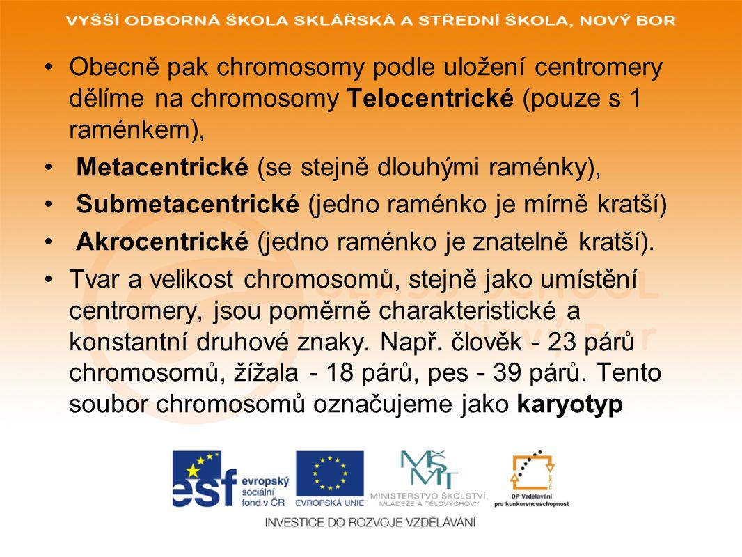 Obecně pak chromosomy podle uložení centromery dělíme na chromosomy Telocentrické (pouze s 1 raménkem), Metacentrické (se stejně dlouhými raménky), Submetacentrické (jedno raménko je mírně kratší) Akrocentrické (jedno raménko je znatelně kratší).
