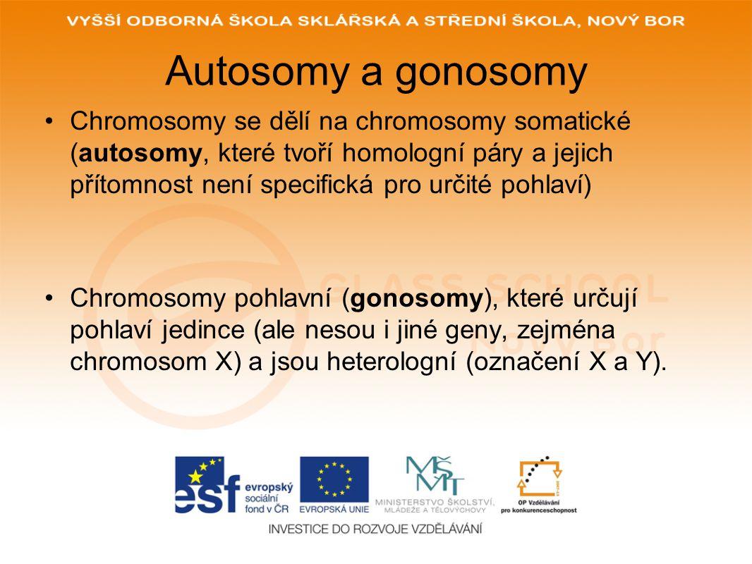 Autosomy a gonosomy Chromosomy se dělí na chromosomy somatické (autosomy, které tvoří homologní páry a jejich přítomnost není specifická pro určité pohlaví) Chromosomy pohlavní (gonosomy), které určují pohlaví jedince (ale nesou i jiné geny, zejména chromosom X) a jsou heterologní (označení X a Y).