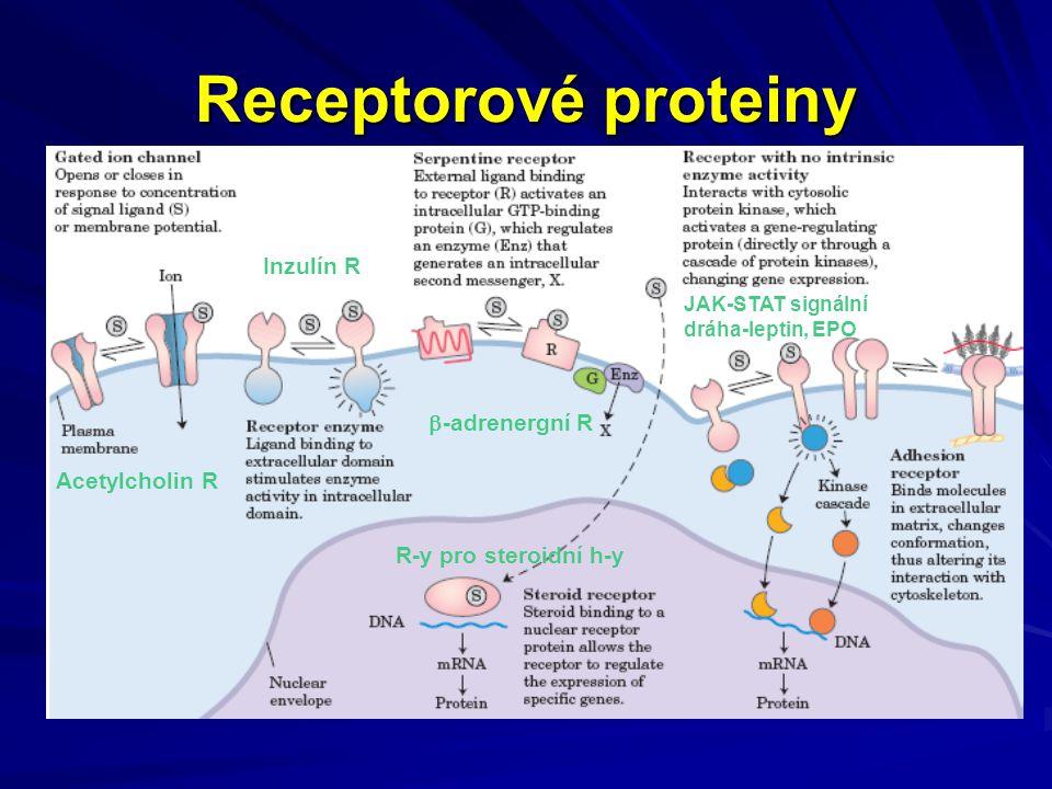 JAK-STAT signalizační dráha (receptor EPO, leptinový R)
