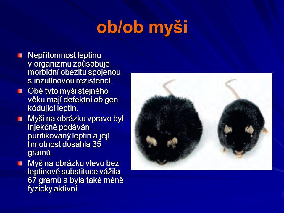 Potkani kmene Koletsky Obezita vyvolaná mutací leptinového receptoru u potkana kmene Koletsky Mutace způsobuje vymizení extracelulární domény tohoto receptoru (na obrázku vpravo) Vlevo normální potkan kmene Wistar stejného věku
