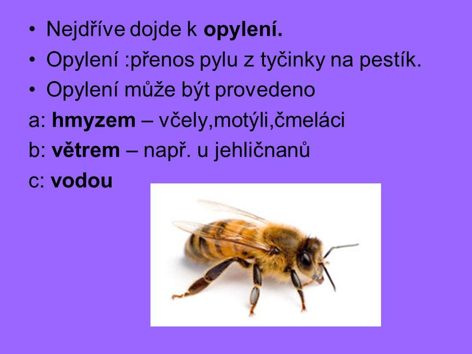 Nejdříve dojde k opylení. Opylení :přenos pylu z tyčinky na pestík. Opylení může být provedeno a: hmyzem – včely,motýli,čmeláci b: větrem – např. u je