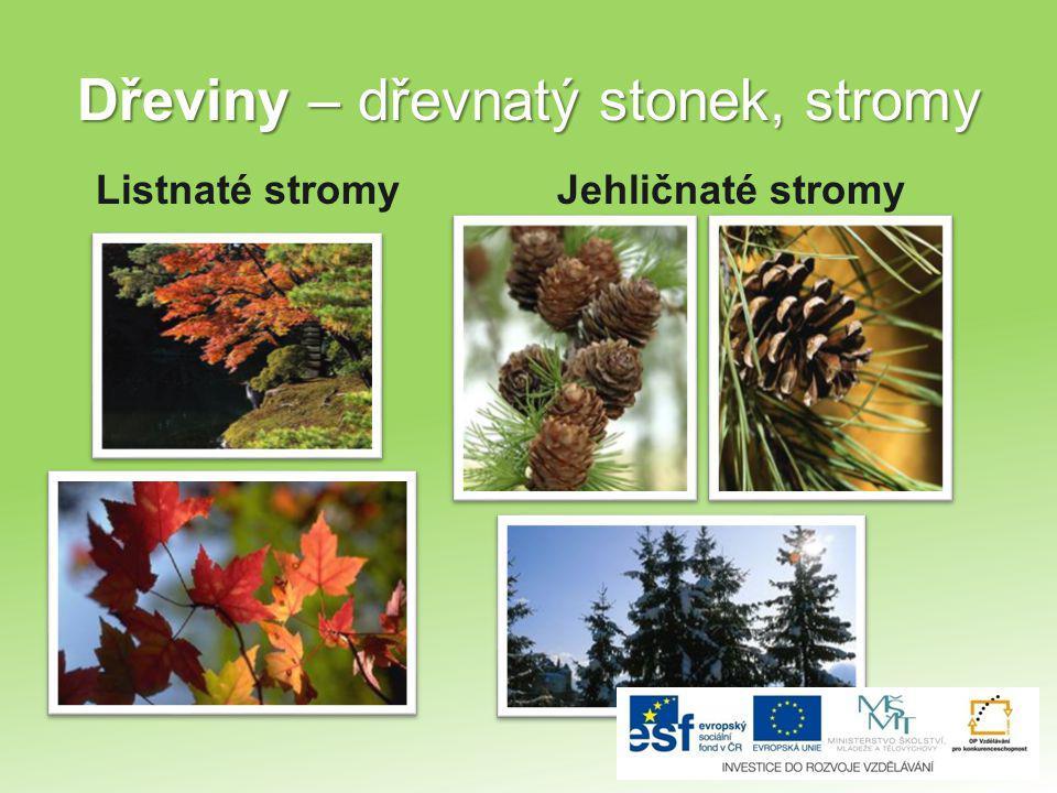 Dřeviny – dřevnatý stonek, stromy Listnaté stromyJehličnaté stromy