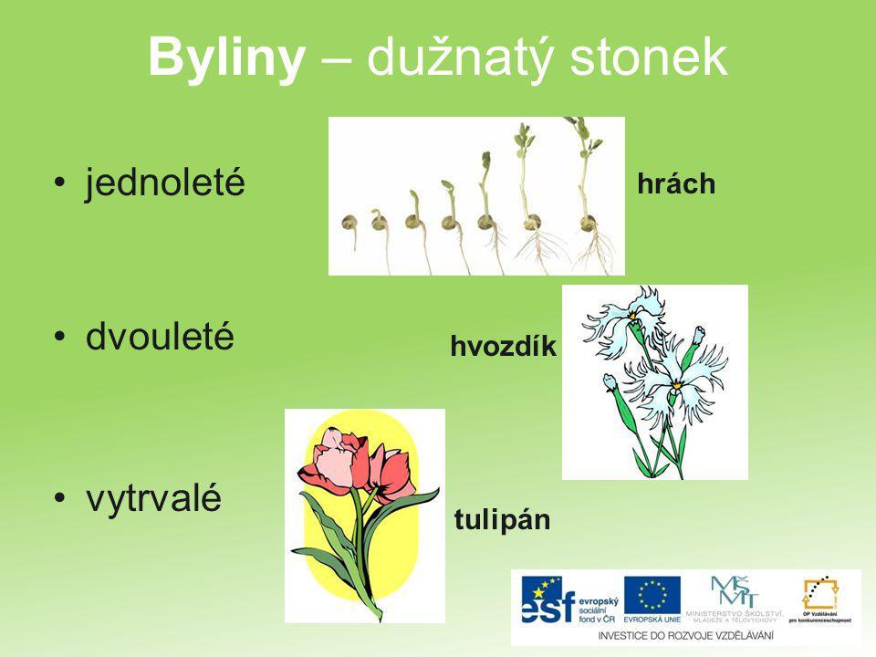 Byliny – dužnatý stonek jednoleté dvouleté vytrvalé hrách hvozdík tulipán