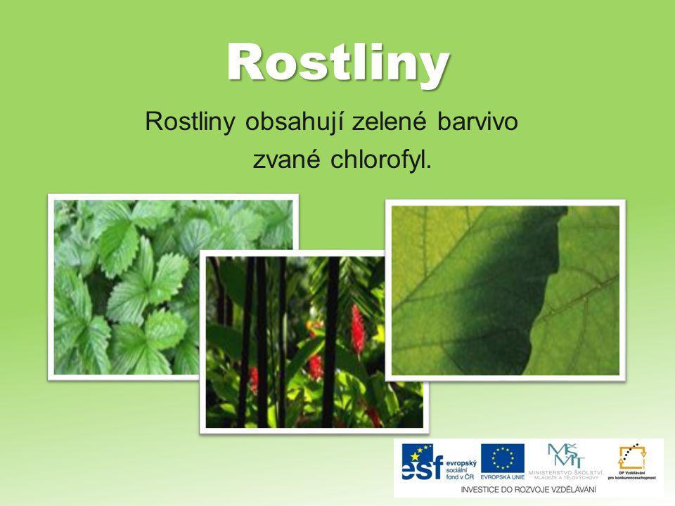 Rostliny Rostliny obsahují zelené barvivo zvané chlorofyl.