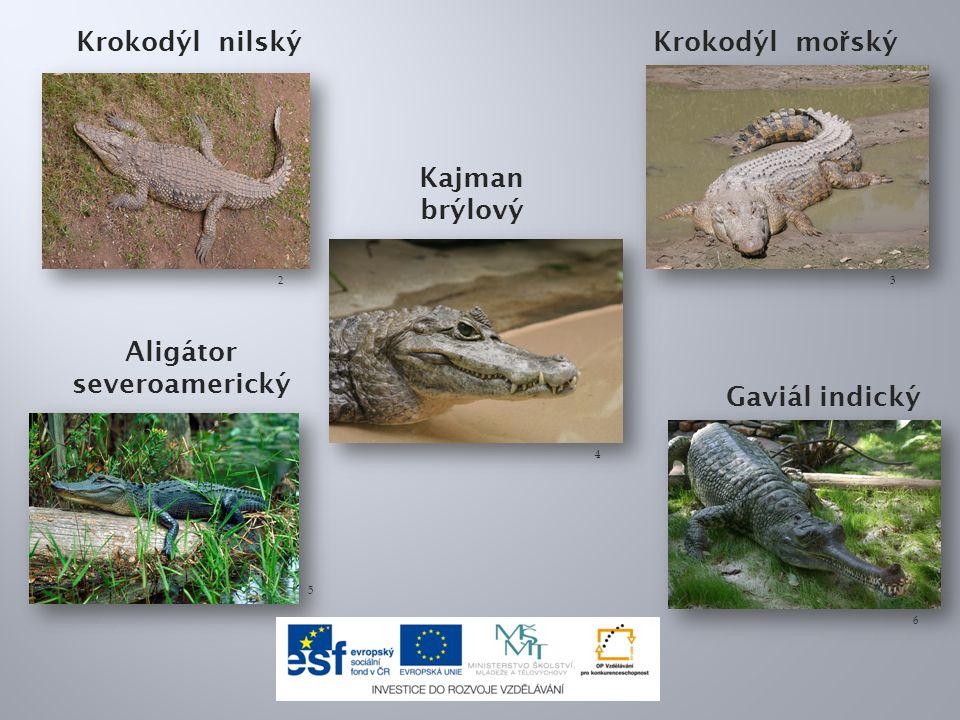 Krokodýl nilský Krokodýl mo ř ský 23 Kajman brýlový 4 Aligátor severoamerický Gaviál indický 5 6
