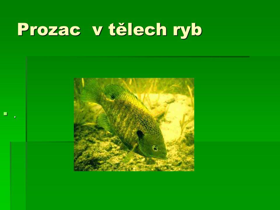 Prozac v tělech ryb ....
