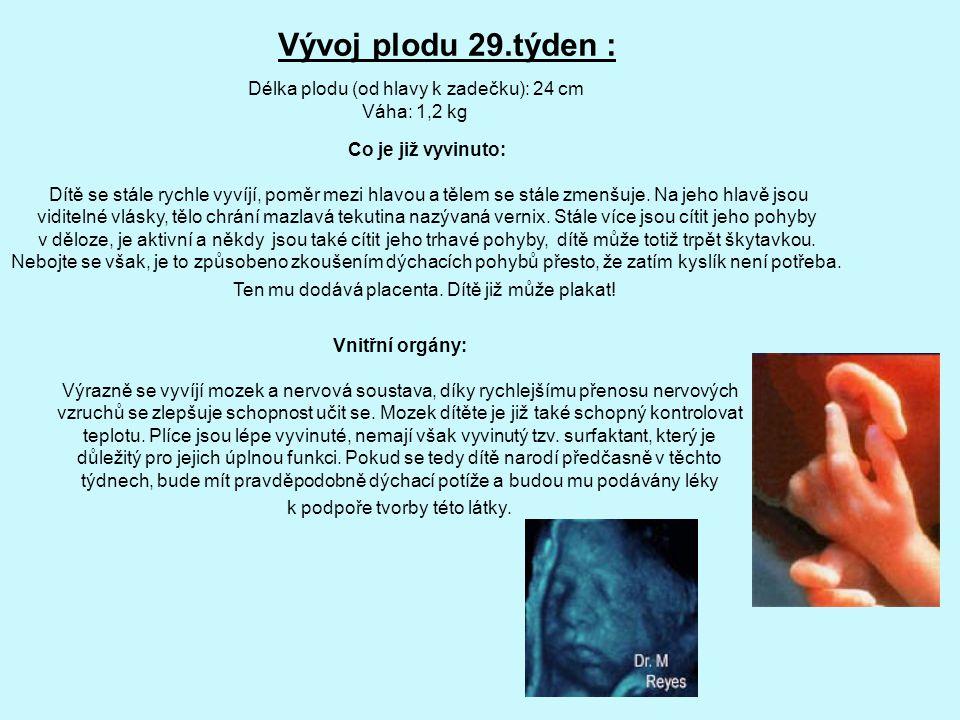 Vývoj plodu 29.týden : Délka plodu (od hlavy k zadečku): 24 cm Váha: 1,2 kg Co je již vyvinuto: Dítě se stále rychle vyvíjí, poměr mezi hlavou a tělem