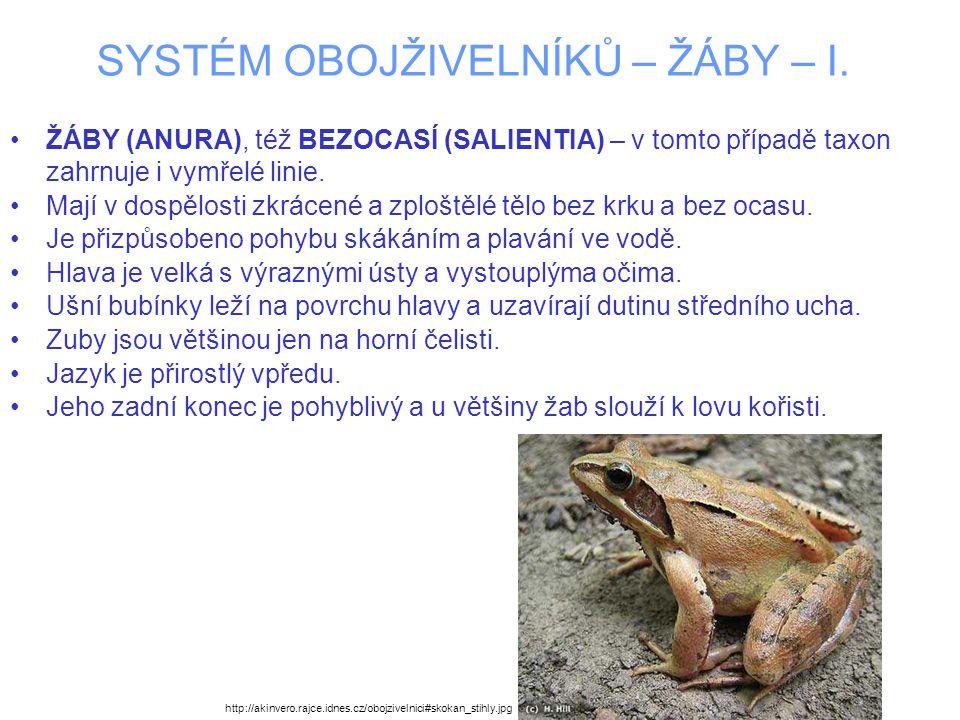 SYSTÉM OBOJŽIVELNÍKŮ – ŽÁBY – I. ŽÁBY (ANURA), též BEZOCASÍ (SALIENTIA) – v tomto případě taxon zahrnuje i vymřelé linie. Mají v dospělosti zkrácené a