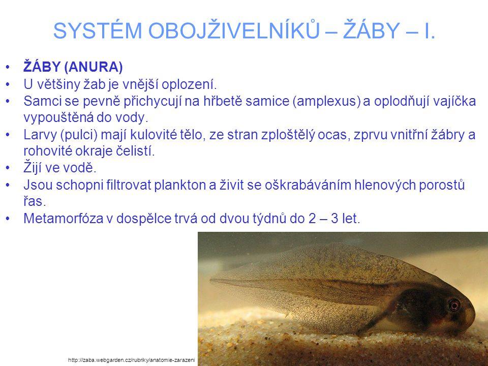 SYSTÉM OBOJŽIVELNÍKŮ – ŽÁBY – I. ŽÁBY (ANURA) U většiny žab je vnější oplození. Samci se pevně přichycují na hřbetě samice (amplexus) a oplodňují vají