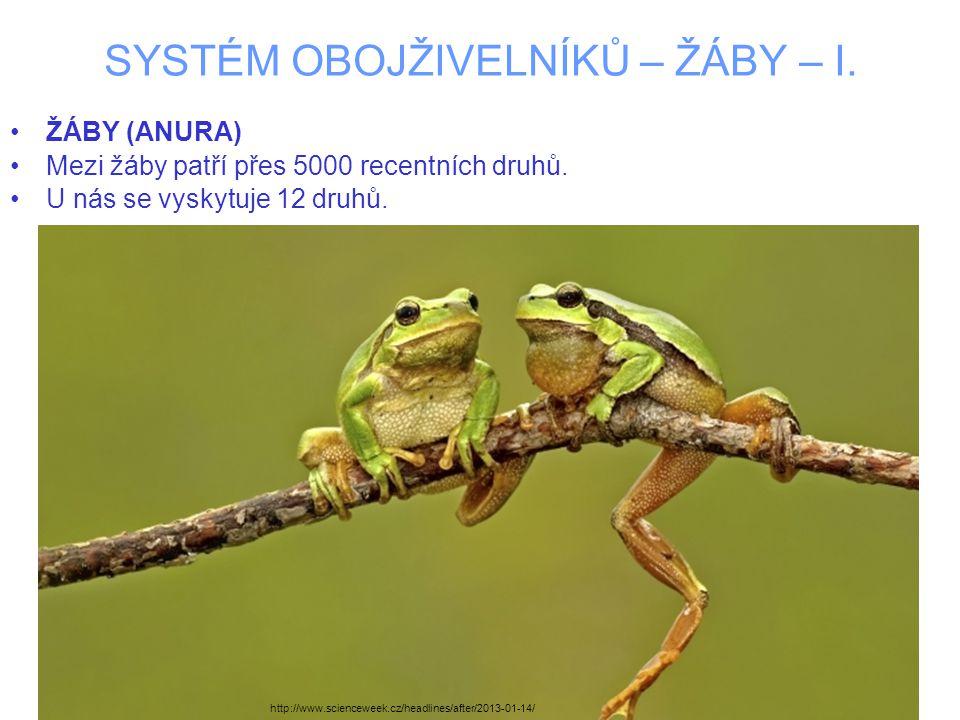 SYSTÉM OBOJŽIVELNÍKŮ – ŽÁBY – I. ŽÁBY (ANURA) Mezi žáby patří přes 5000 recentních druhů. U nás se vyskytuje 12 druhů. http://www.scienceweek.cz/headl