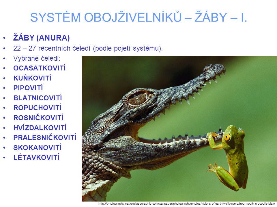 SYSTÉM OBOJŽIVELNÍKŮ – ŽÁBY – I. ŽÁBY (ANURA) 22 – 27 recentních čeledí (podle pojetí systému). Vybrané čeledi: OCASATKOVITÍ KUŇKOVITÍ PIPOVITÍ BLATNI