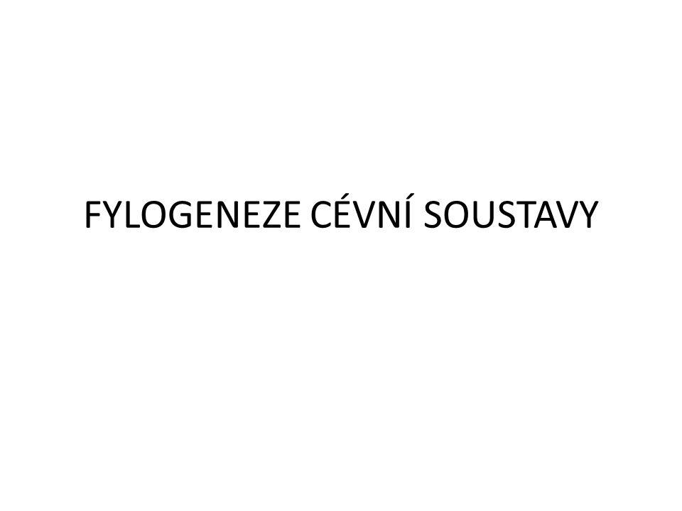 Kmen Měkkýši Otevřená cévní soustava (výjimkou jsou hlavonožci) Hemolymfa Barvivo hemocyanin