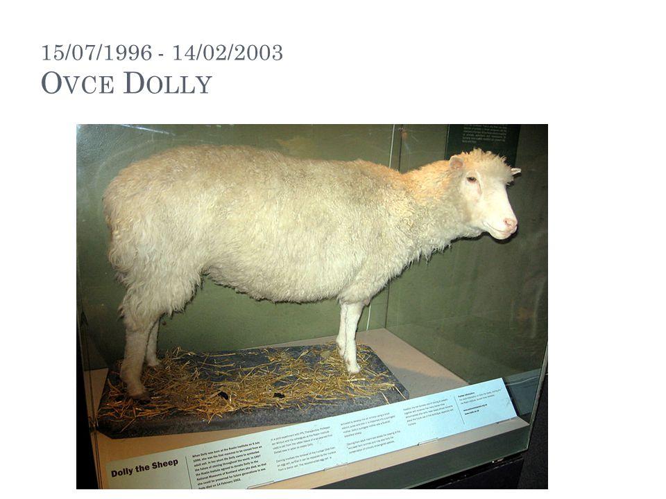 15/07/1996 - 14/02/2003 O VCE D OLLY