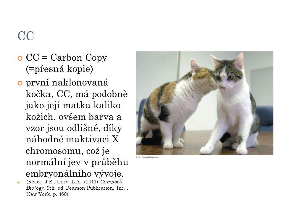 CC CC = Carbon Copy (=přesná kopie) první naklonovaná kočka, CC, má podobně jako její matka kaliko kožich, ovšem barva a vzor jsou odlišné, díky náhodné inaktivaci X chromosomu, což je normální jev v průběhu embryonálního vývoje.