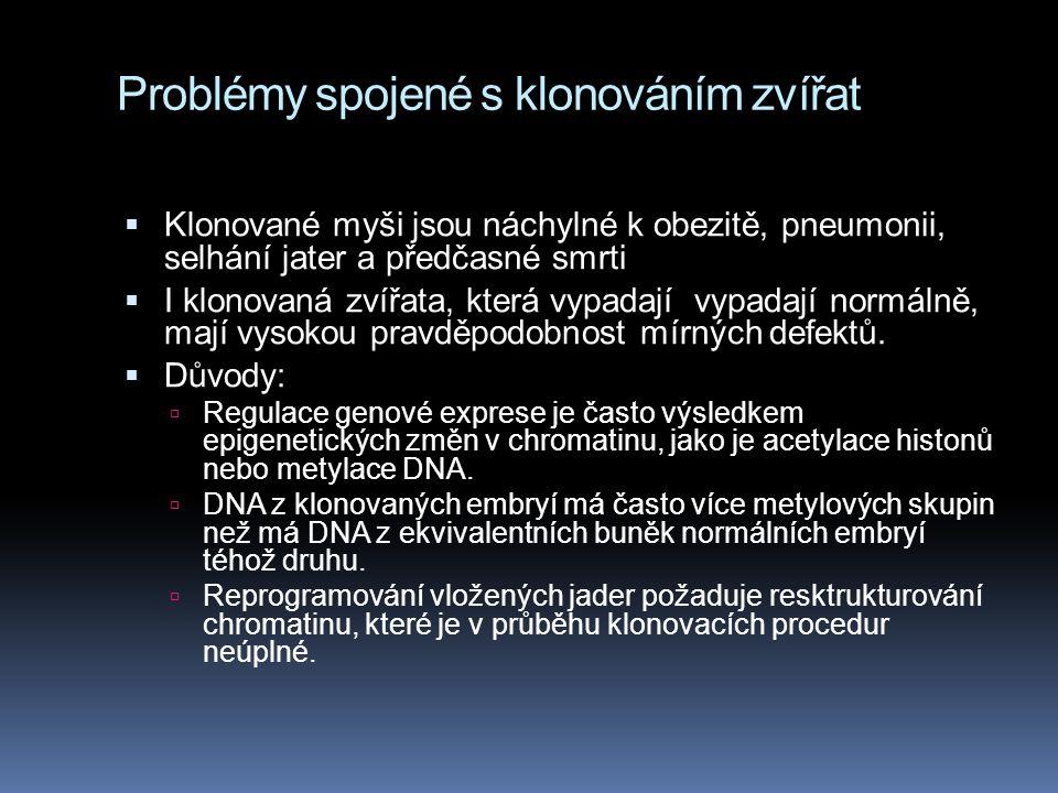 Problémy spojené s klonováním zvířat  Klonované myši jsou náchylné k obezitě, pneumonii, selhání jater a předčasné smrti  I klonovaná zvířata, která