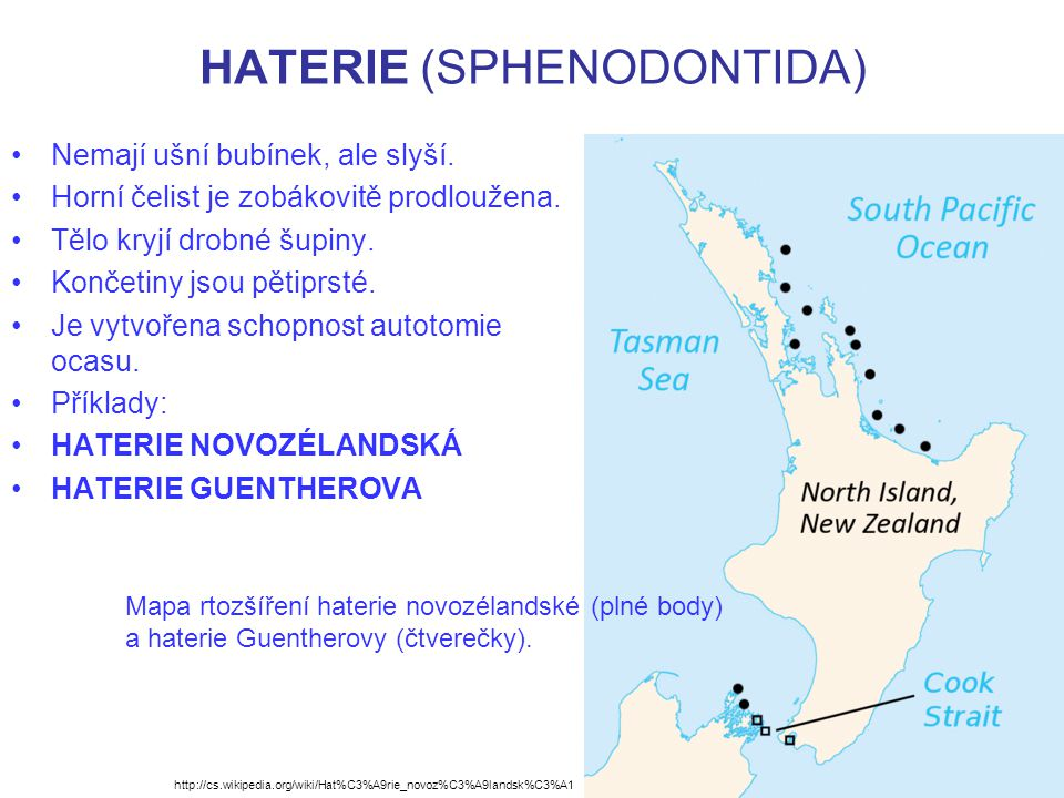 HATERIE (SPHENODONTIDA) http://www.reptileevolution.com/sphenodon.htm Kostra haterie.