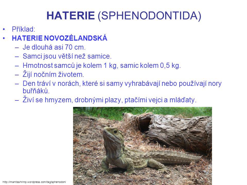 HATERIE (SPHENODONTIDA) Příklad: HATERIE NOVOZÉLANDSKÁ –Je dlouhá asi 70 cm. –Samci jsou větší než samice. –Hmotnost samců je kolem 1 kg, samic kolem