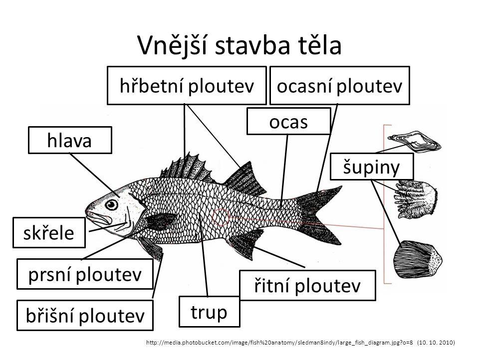Vnitřní stavba těla http://media.photobucket.com/image/fish%20anatomy/michelletiara/Fish-Anatomy.jpg?o=5 (10.