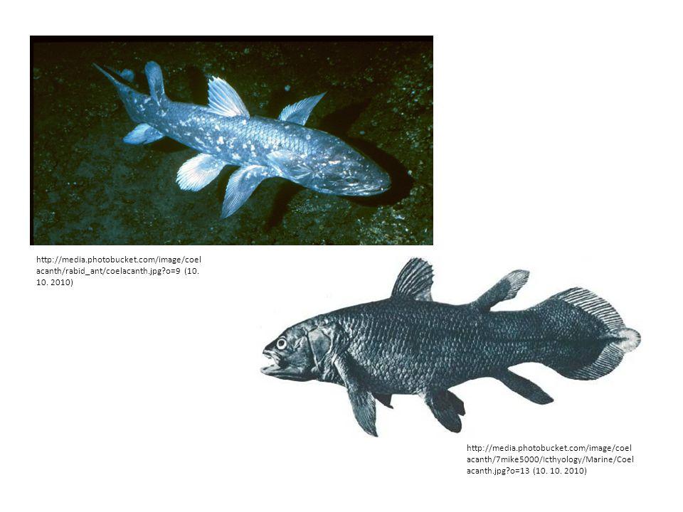 Dvojdyšné ryby Tzv.bahníci – dýchají plícemi vytvořenými z plynového měchýře.