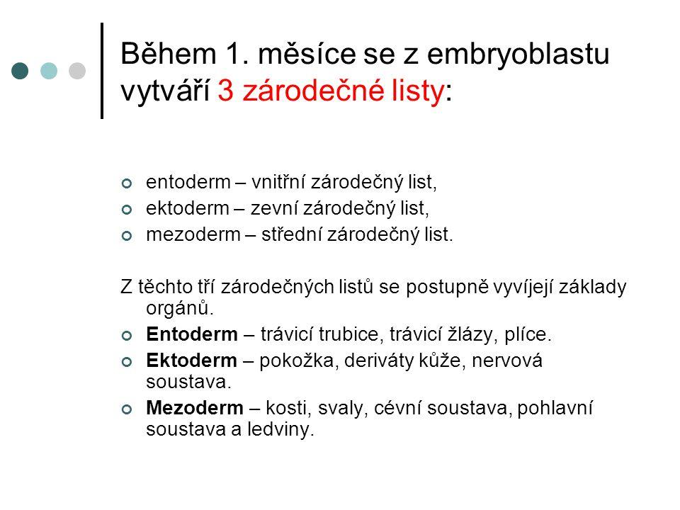 Během 1. měsíce se z embryoblastu vytváří 3 zárodečné listy: entoderm – vnitřní zárodečný list, ektoderm – zevní zárodečný list, mezoderm – střední zá