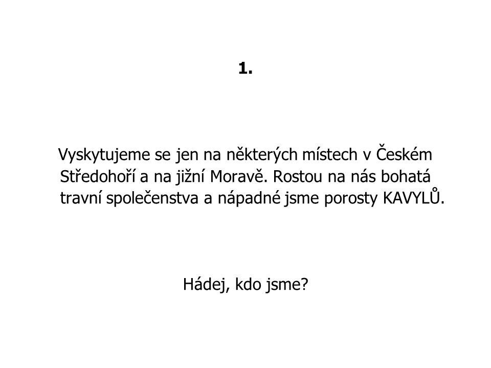 1. Vyskytujeme se jen na některých místech v Českém Středohoří a na jižní Moravě.